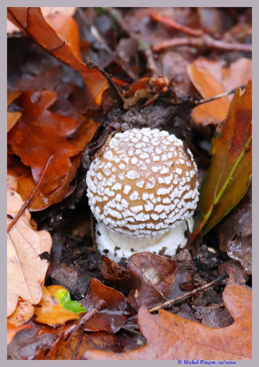 [fil ouvert] les champignons - Page 19 Dsc09272