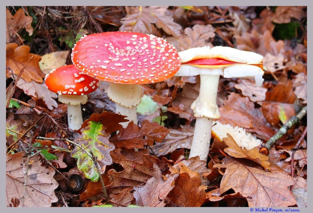 [fil ouvert] les champignons - Page 19 Dsc09273