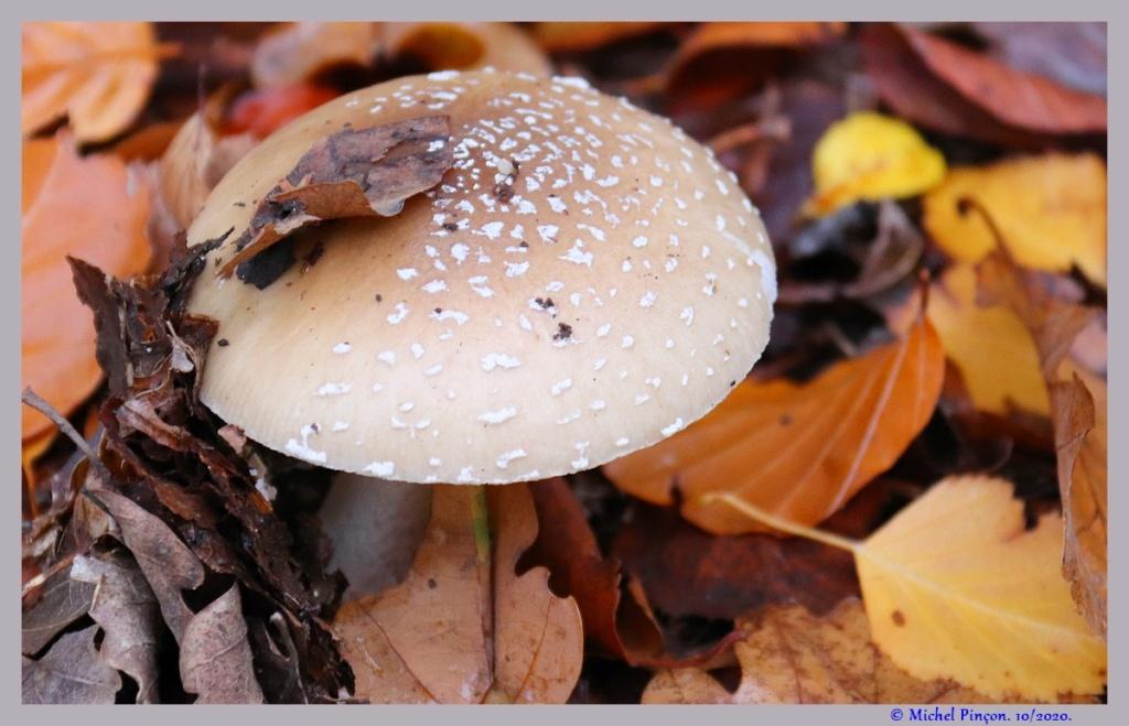 [fil ouvert] les champignons - Page 19 Dsc09274