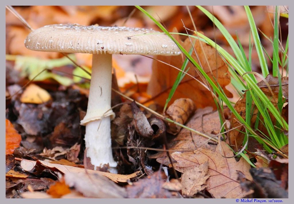 [fil ouvert] les champignons - Page 19 Dsc09276