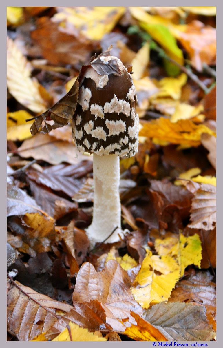 [fil ouvert] les champignons - Page 19 Dsc09278