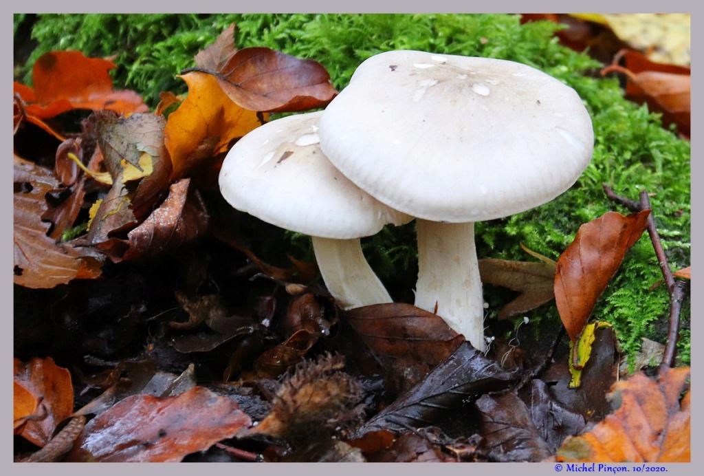 [fil ouvert] les champignons - Page 19 Dsc09279