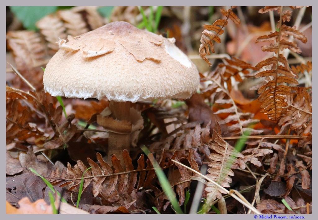 [fil ouvert] les champignons - Page 19 Dsc09280