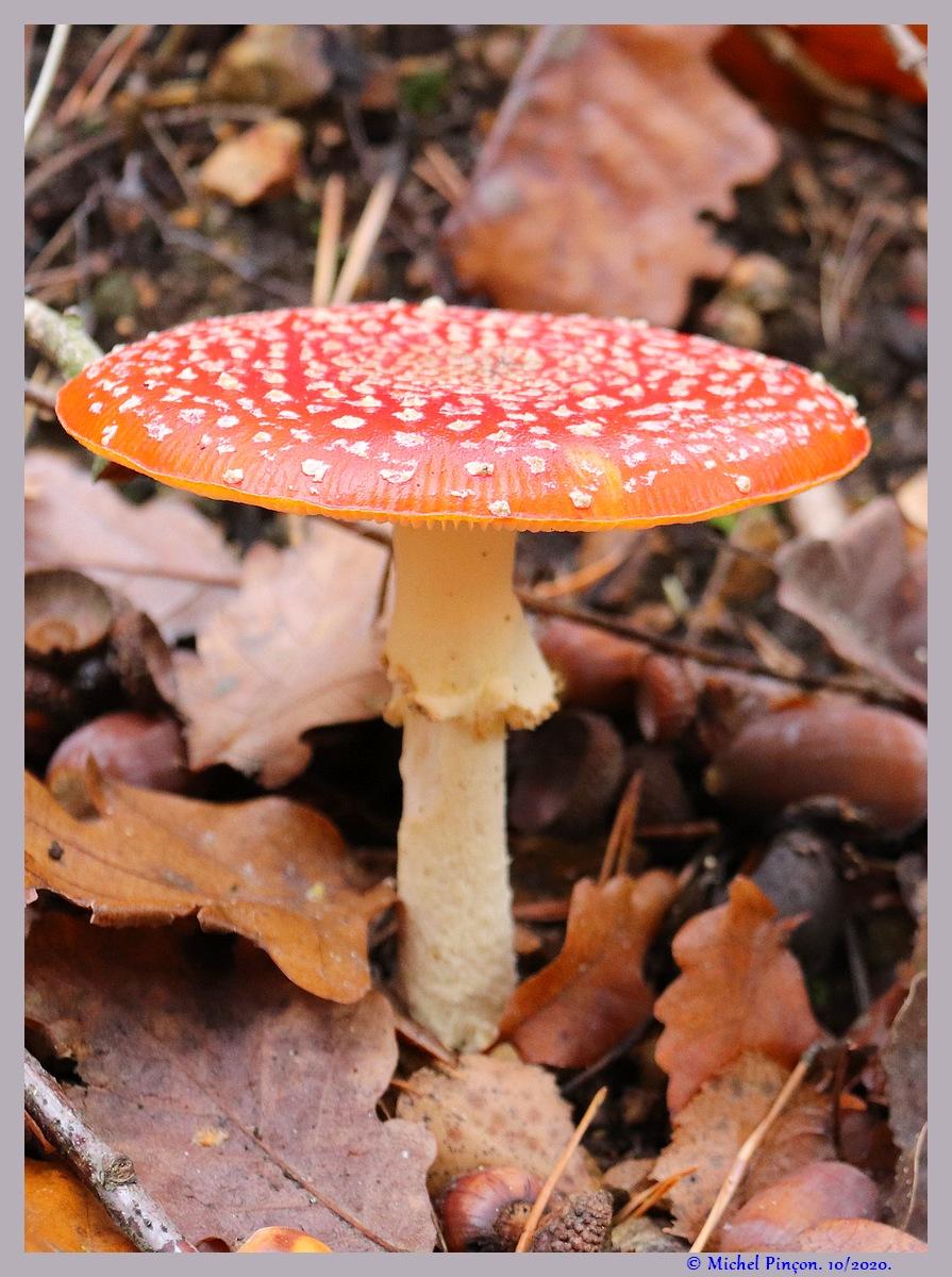 [fil ouvert] les champignons - Page 19 Dsc09283