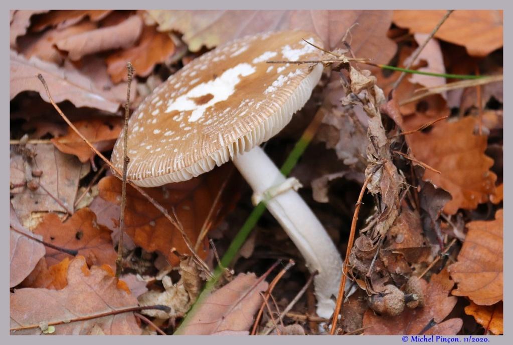 [fil ouvert] les champignons - Page 19 Dsc09304