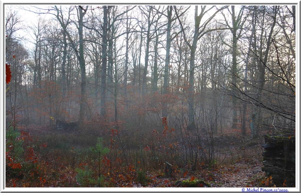 [fil ouvert] la forêt dans tous ses états - Page 29 Dsc09601