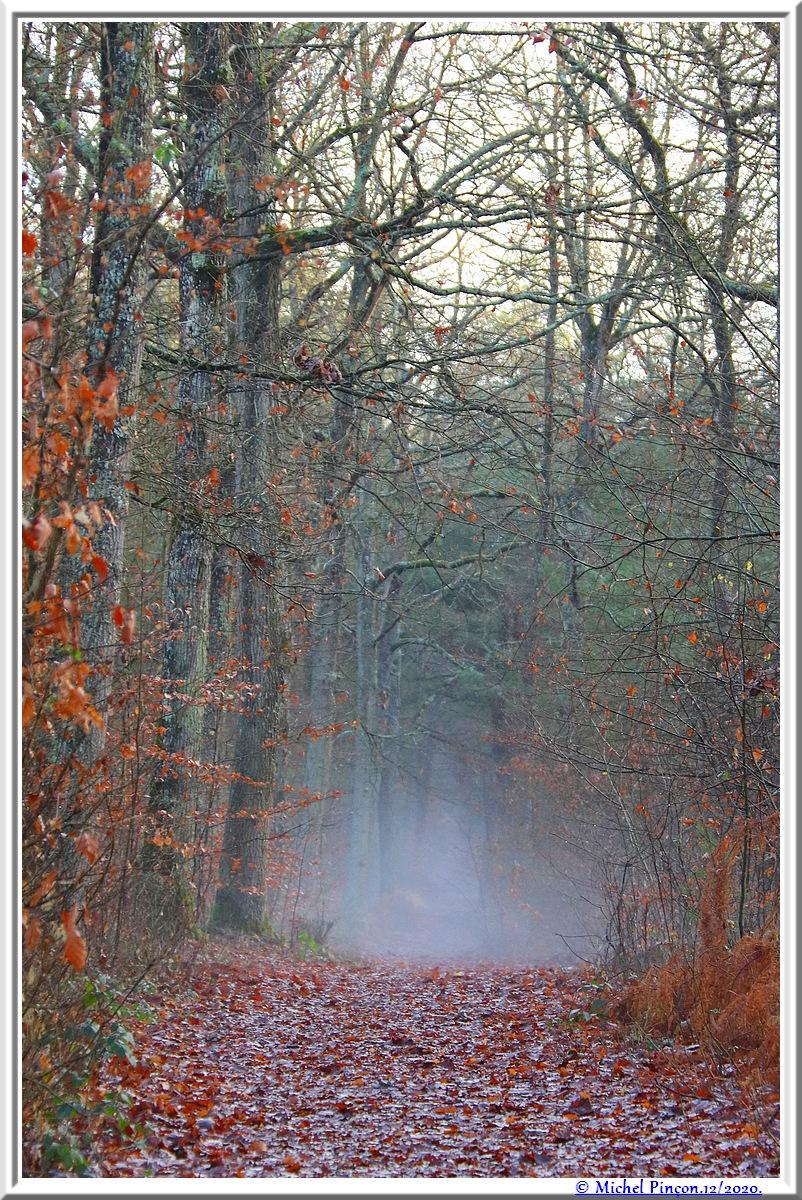 [fil ouvert] la forêt dans tous ses états - Page 29 Dsc09602