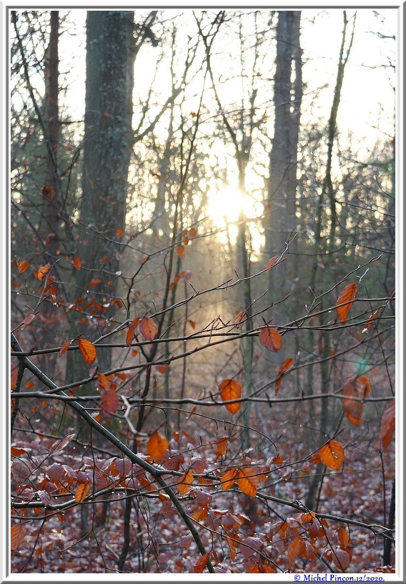 [fil ouvert] la forêt dans tous ses états - Page 29 Dsc09604