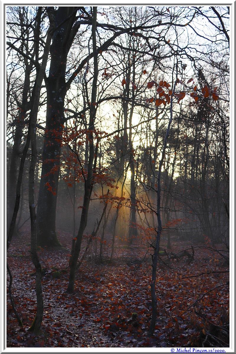[fil ouvert] la forêt dans tous ses états - Page 29 Dsc09605