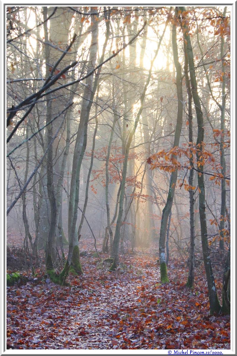 [fil ouvert] la forêt dans tous ses états - Page 29 Dsc09606