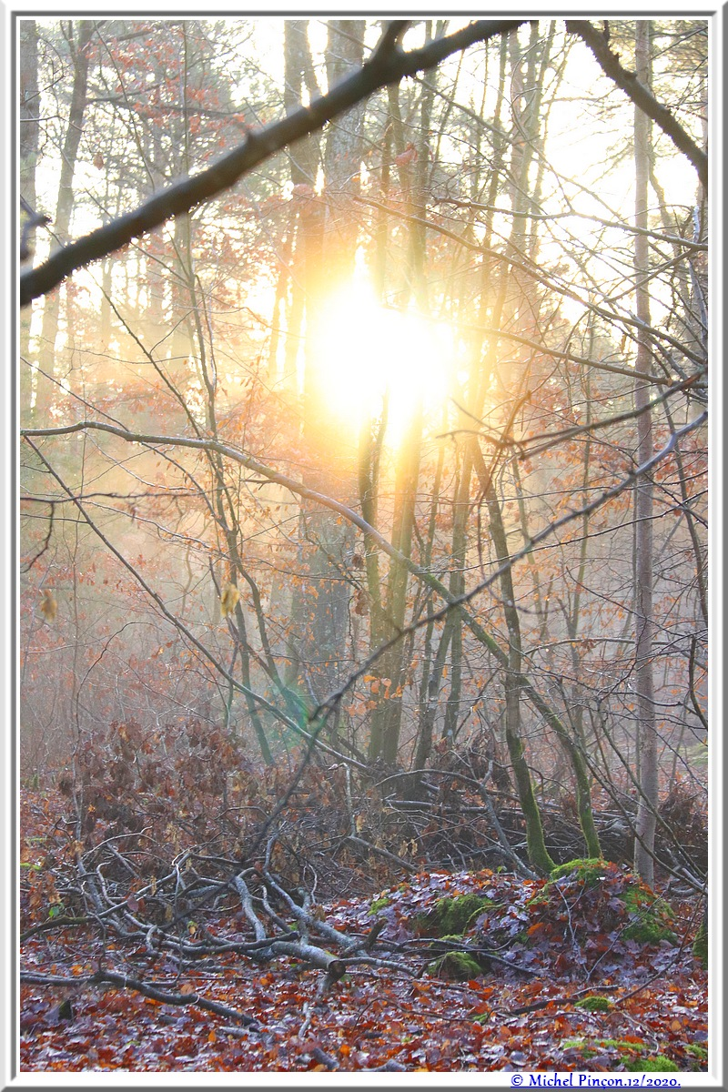 [fil ouvert] la forêt dans tous ses états - Page 29 Dsc09607