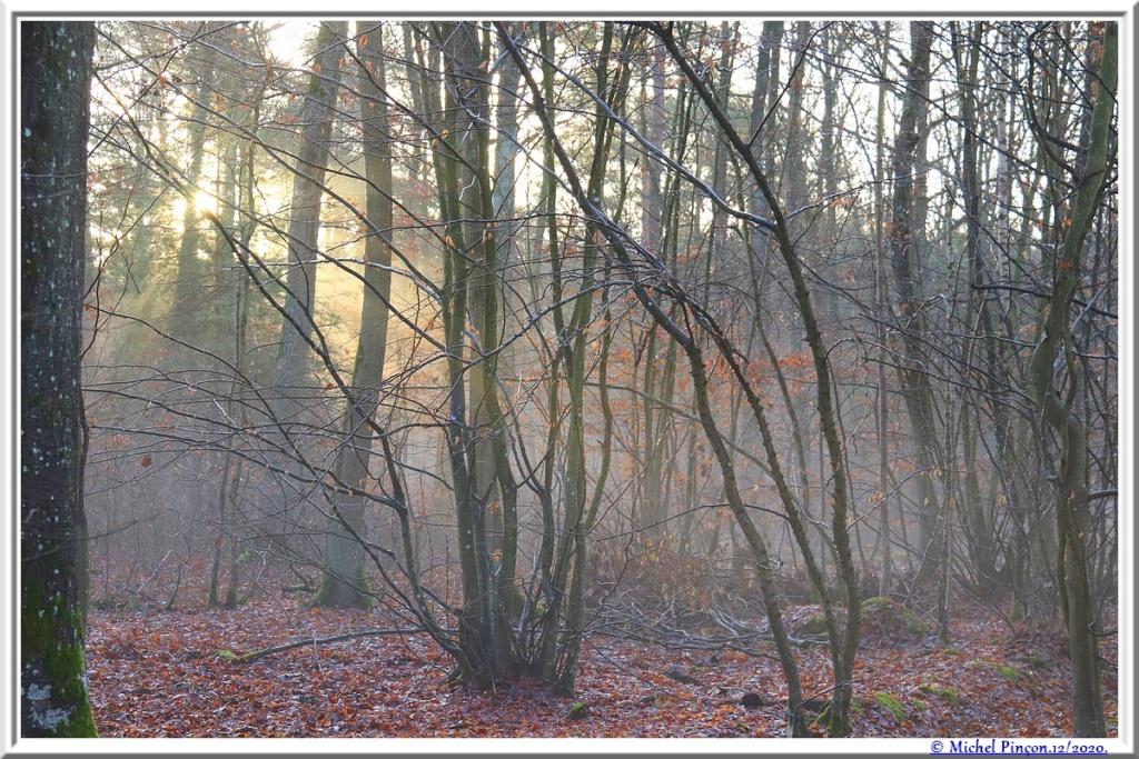 [fil ouvert] la forêt dans tous ses états - Page 29 Dsc09608