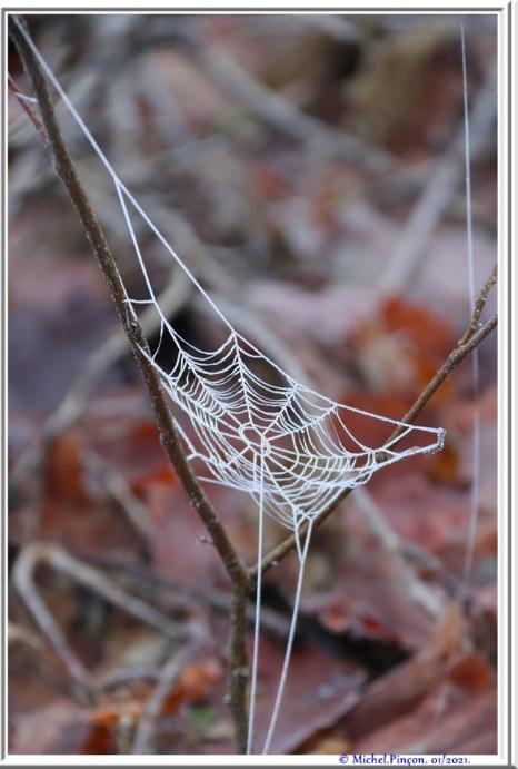 [Fil ouvert] Toile d'araignée - Page 2 Dsc09681