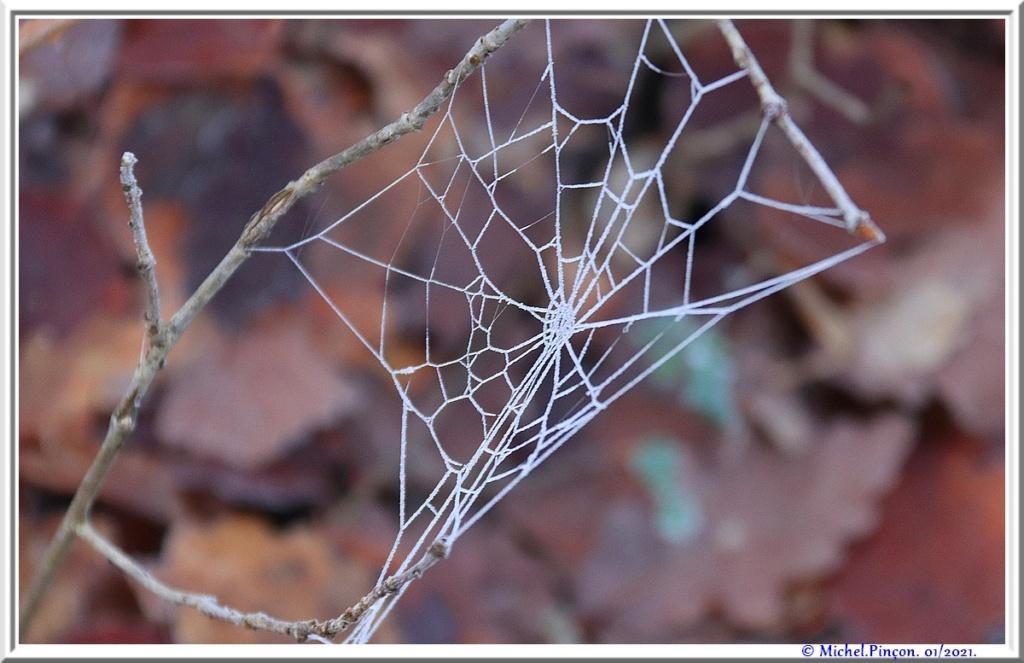 [Fil ouvert] Toile d'araignée - Page 2 Dsc09682