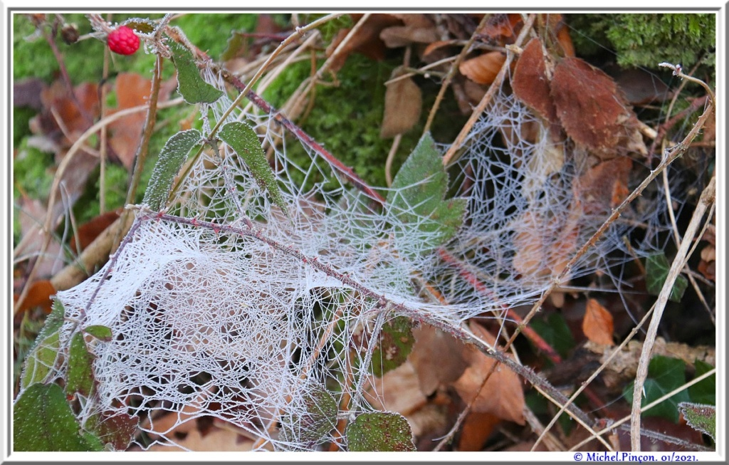 [Fil ouvert] Toile d'araignée - Page 2 Dsc09683