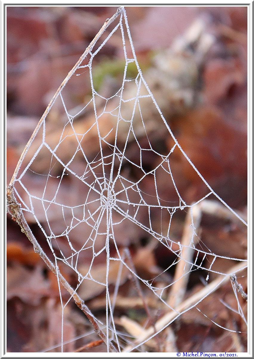[Fil ouvert] Toile d'araignée - Page 2 Dsc09684