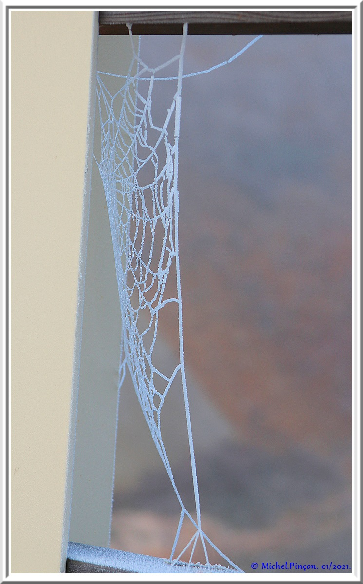 [Fil ouvert] Toile d'araignée - Page 2 Dsc09685
