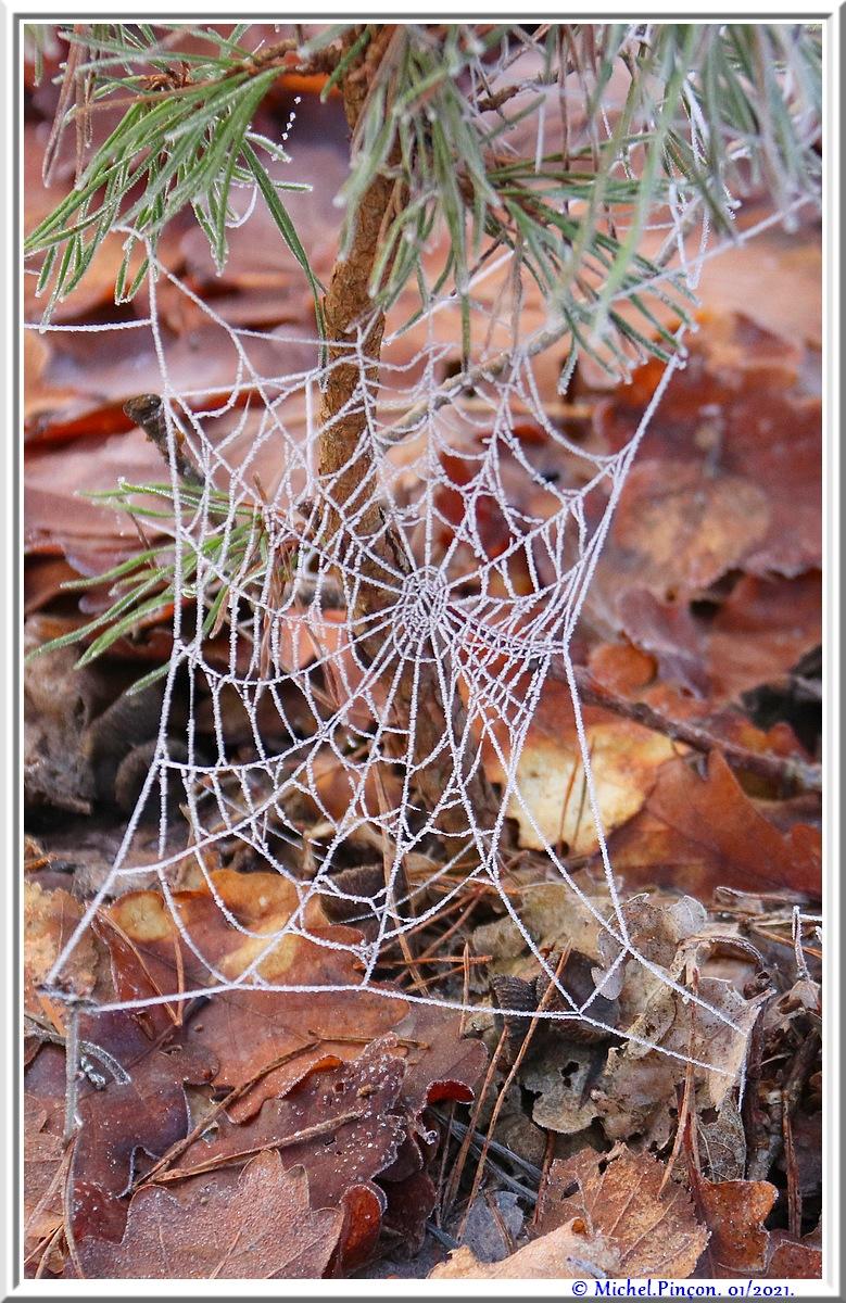 [Fil ouvert] Toile d'araignée - Page 2 Dsc09694