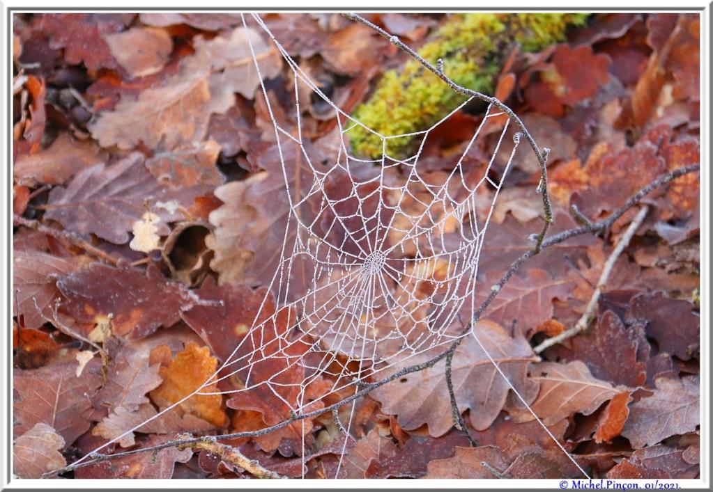 [Fil ouvert] Toile d'araignée - Page 2 Dsc09695
