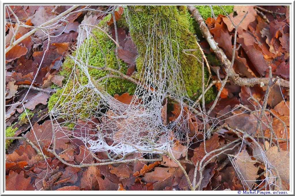 [Fil ouvert] Toile d'araignée - Page 2 Dsc09696