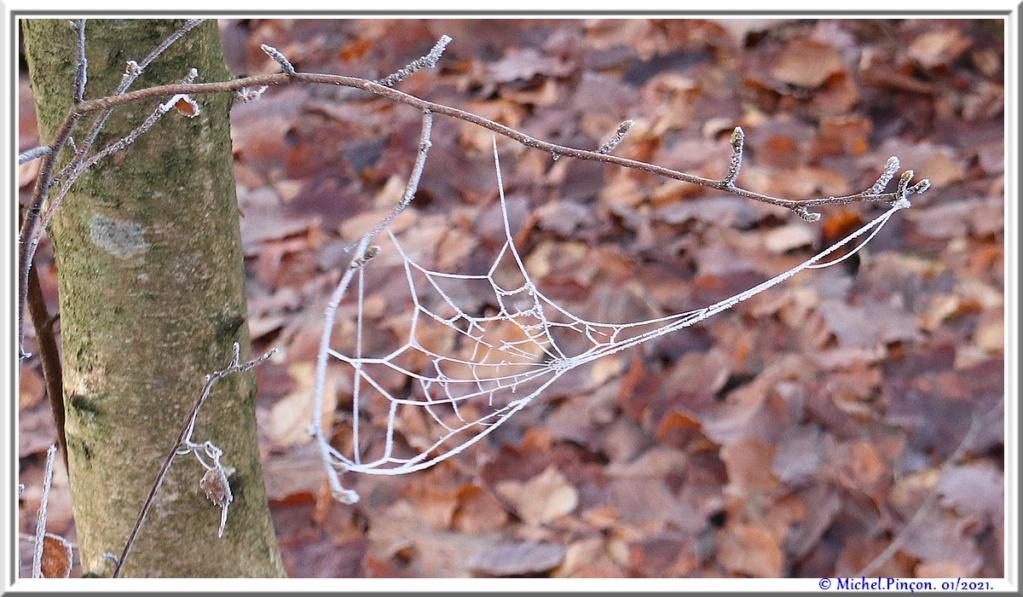 [Fil ouvert] Toile d'araignée - Page 2 Dsc09697
