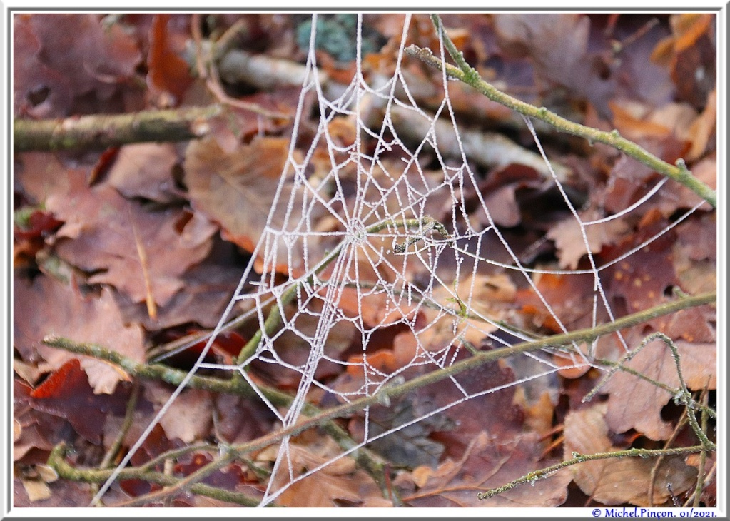 [Fil ouvert] Toile d'araignée - Page 2 Dsc09698