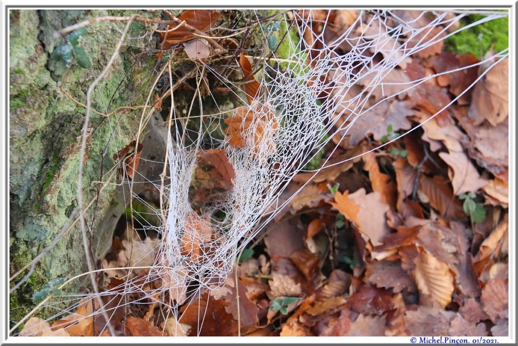 [Fil ouvert] Toile d'araignée - Page 2 Dsc09699