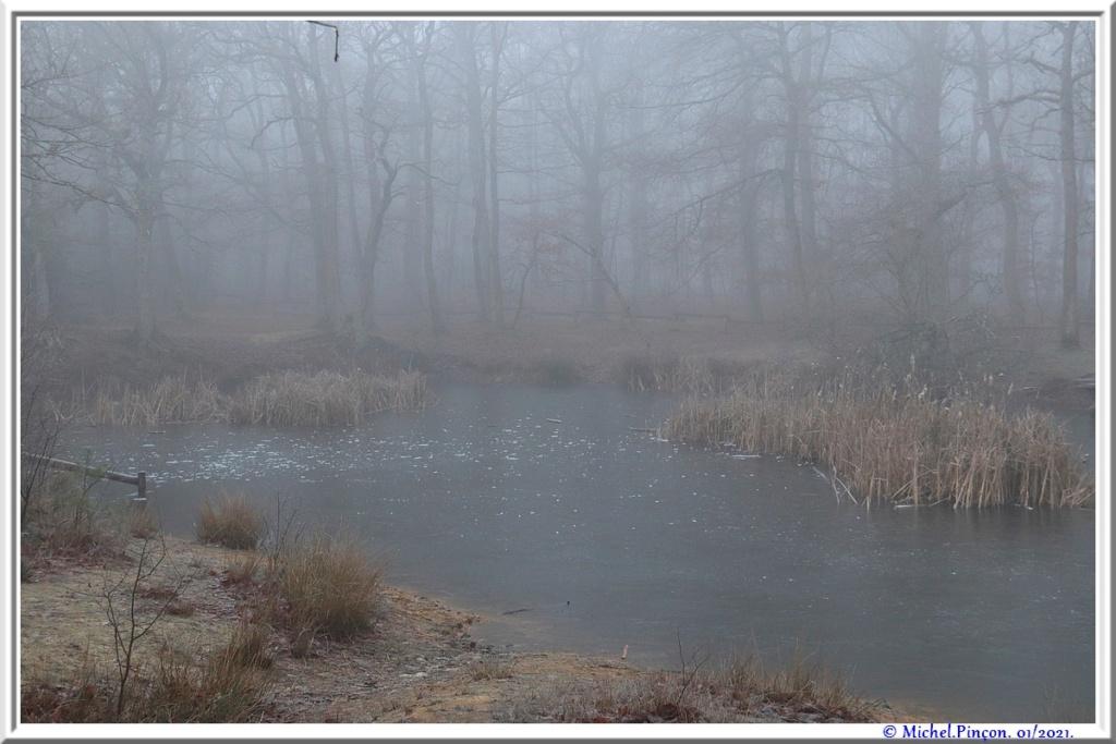 [fil ouvert] la forêt dans tous ses états - Page 29 Dsc09943