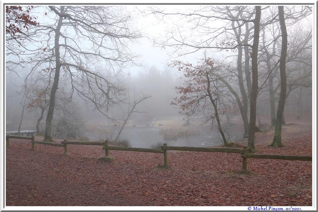 [fil ouvert] la forêt dans tous ses états - Page 29 Dsc09947