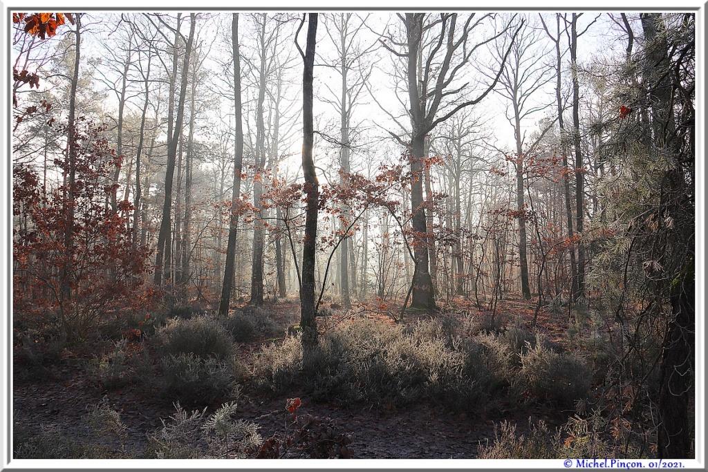 [fil ouvert] la forêt dans tous ses états - Page 29 Dsc09949