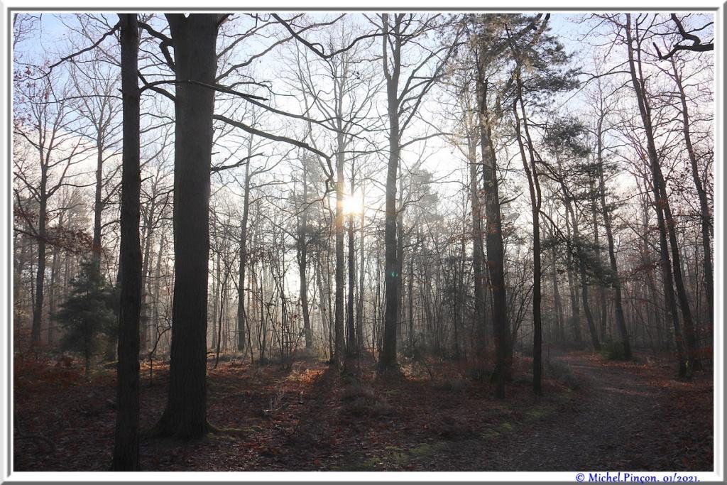 [fil ouvert] la forêt dans tous ses états - Page 29 Dsc09950