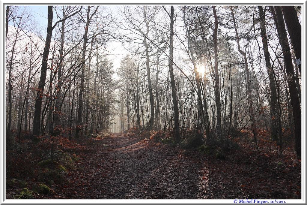 [fil ouvert] la forêt dans tous ses états - Page 29 Dsc09951