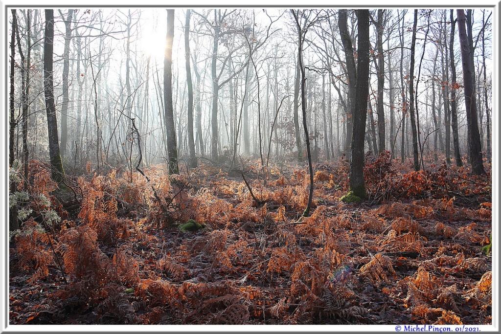 [fil ouvert] la forêt dans tous ses états - Page 29 Dsc09952