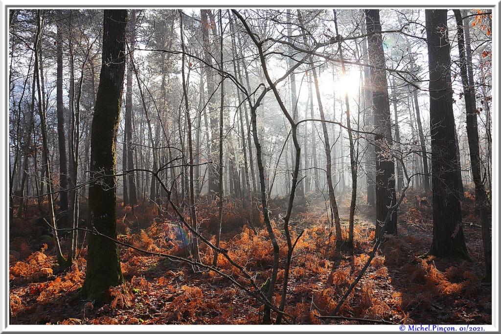 [fil ouvert] la forêt dans tous ses états - Page 29 Dsc09953
