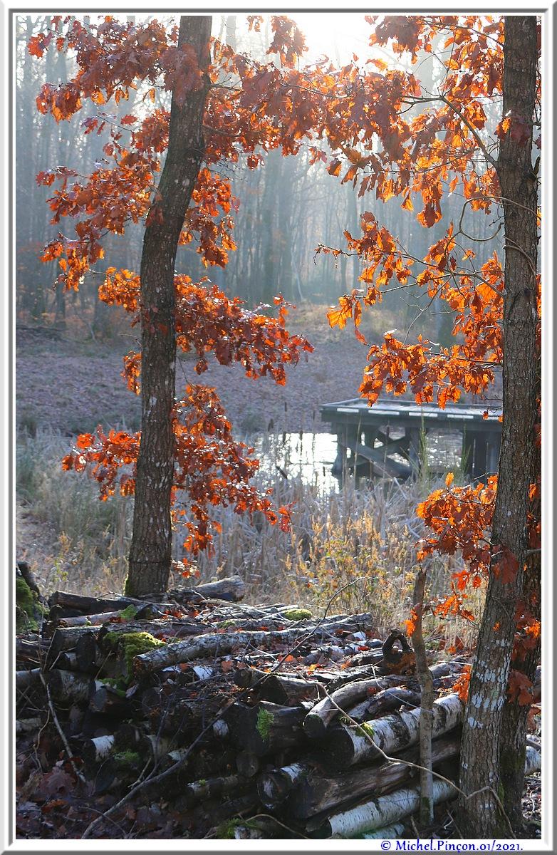 [fil ouvert] la forêt dans tous ses états - Page 29 Dsc09954