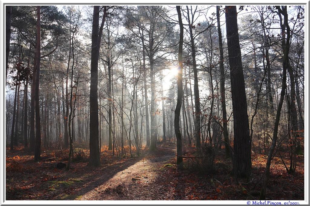 [fil ouvert] la forêt dans tous ses états - Page 29 Dsc09955