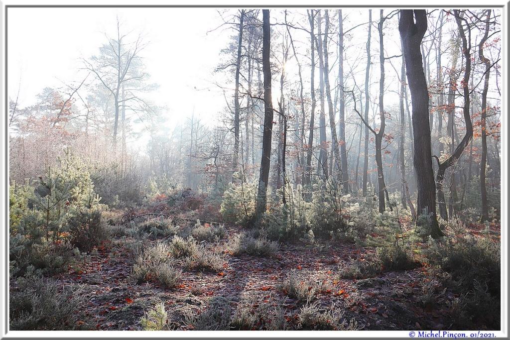 [fil ouvert] la forêt dans tous ses états - Page 29 Dsc09956
