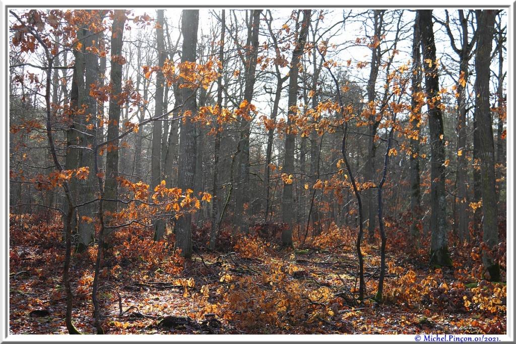 [fil ouvert] la forêt dans tous ses états - Page 29 Dsc09957