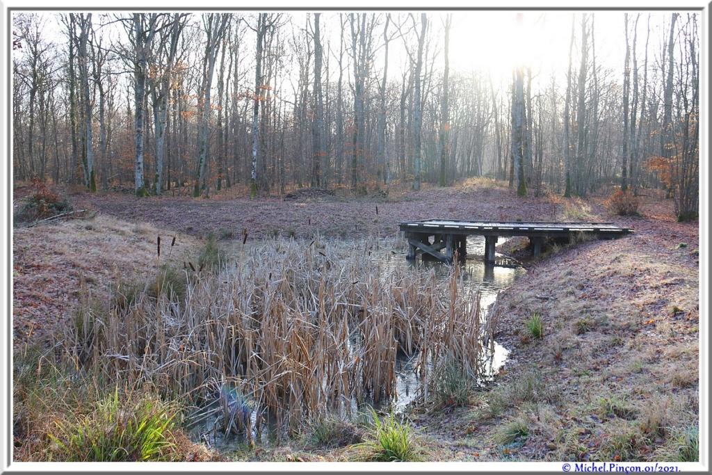 [fil ouvert] la forêt dans tous ses états - Page 29 Dsc09958