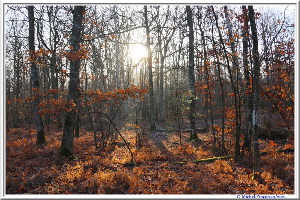 [fil ouvert] la forêt dans tous ses états - Page 29 Dsc09959