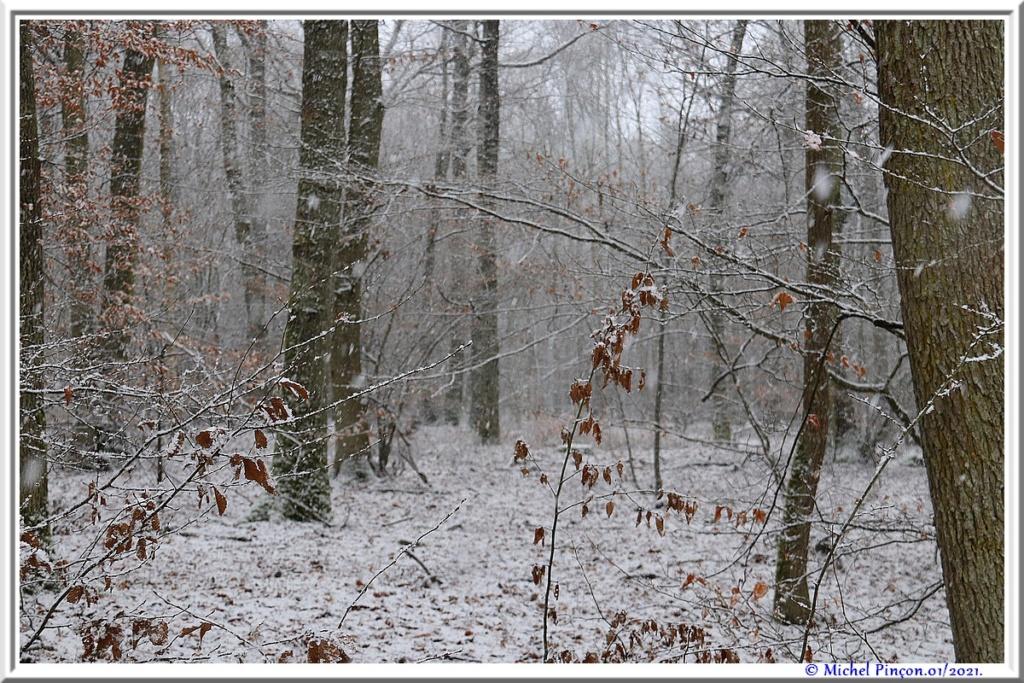 [fil ouvert] la forêt dans tous ses états - Page 29 Dsc09961
