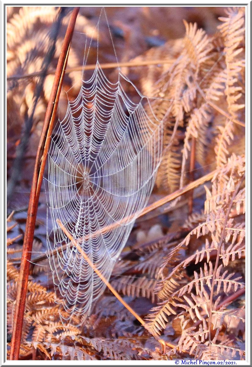 [Fil ouvert] Toile d'araignée - Page 2 Dsc09971