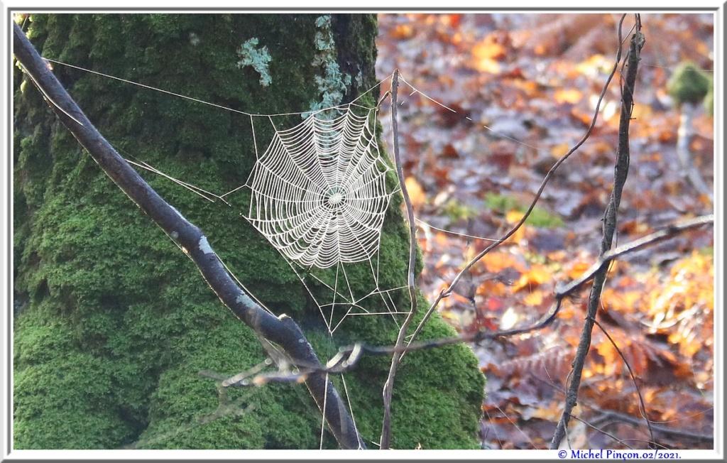[Fil ouvert] Toile d'araignée - Page 2 Dsc09972