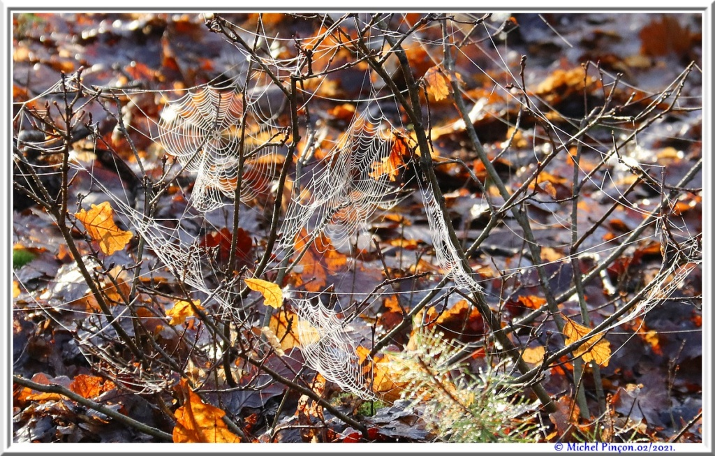 [Fil ouvert] Toile d'araignée - Page 2 Dsc09973