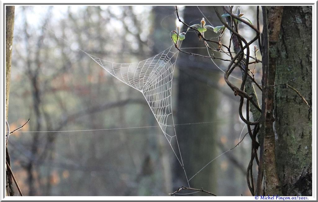 [Fil ouvert] Toile d'araignée - Page 2 Dsc09975