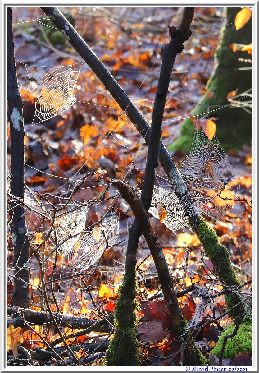 [Fil ouvert] Toile d'araignée - Page 2 Dsc09976