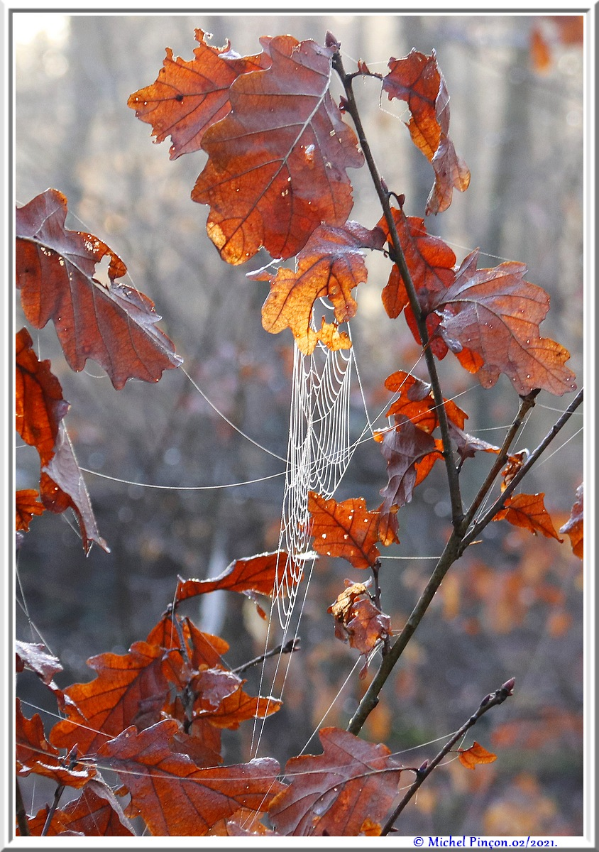 [Fil ouvert] Toile d'araignée - Page 2 Dsc09977