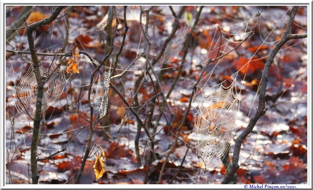 [Fil ouvert] Toile d'araignée - Page 2 Dsc09978