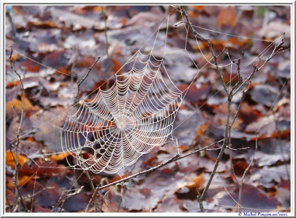 [Fil ouvert] Toile d'araignée - Page 2 Dsc09979