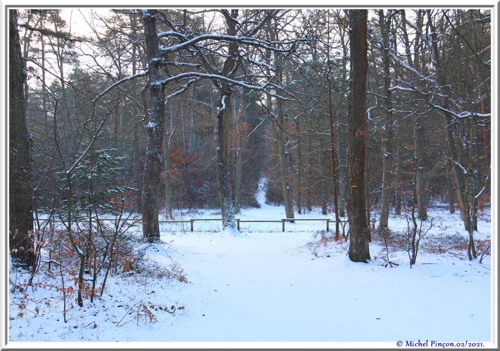 [fil ouvert] la forêt dans tous ses états - Page 29 Dsc10057